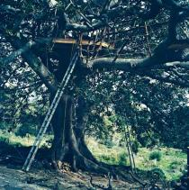 Yto Barrada, Raft in Strangler Figtree, 2010. Deutsche Bank Collection. Courtesy Sfeir-Semler Gallery, Hamburg/Beirut.